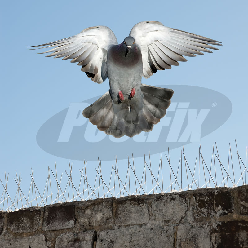 Bird-X Pigeon Spikes Narrow in Stainless Steel by PestFix